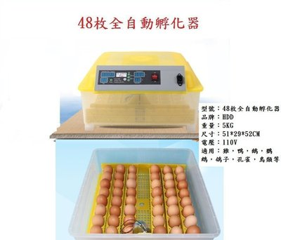孵蛋機 孵化器  48枚全自動孵蛋器  有現貨