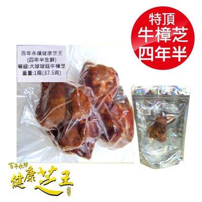 專品藥局 百年永續健康芝王 (四年半) 特頂大球菇牛樟芝/菇 生鮮品 37.5g/1兩【2012415】