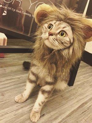 My fit guys 新款逗趣可愛搞笑變身獅子狗狗貓咪造型帽子變裝頭套 預購