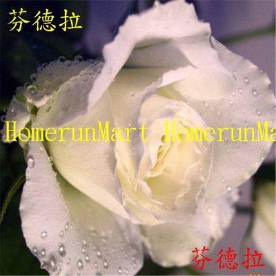 ZRC芬德拉玫瑰種子5粒戴安娜玫瑰花種子 第一夫人 法國玫瑰坦尼克 粉佳人茱麗葉 海洋之歌路易十四 冷美人彩虹玫瑰種子