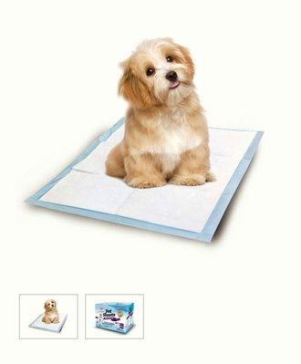 【多娜小鋪】Seeds 惜時 寵物專用尿墊 300張/含運740元/好市多 costco代購