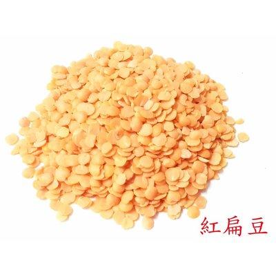 紅扁豆-試吃包/鸚鵡飼料/零嘴/主食/小中大型鸚鵡、蜜袋鼯、松鼠、花栗鼠、倉鼠等寵物/倉鼠飼料、鳥飼料、鸚鵡飼料