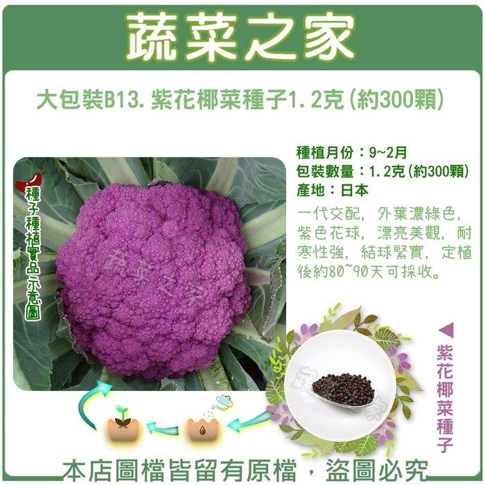 全館滿799免運【蔬菜之家00B13】大包裝.紫花椰菜種子1.2克(約300顆)(一代交配)※此商品不適用郵寄掛※