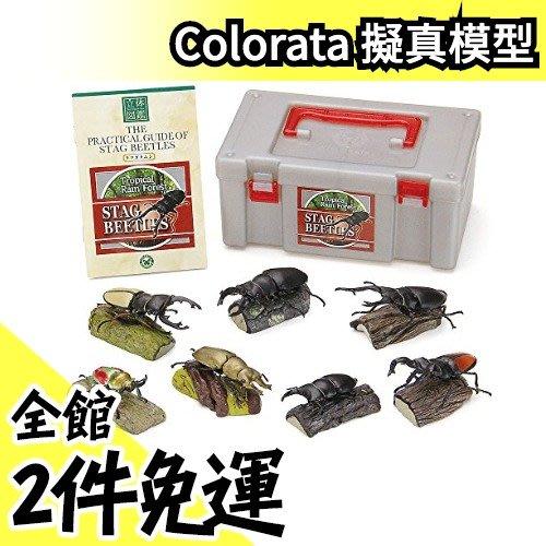 【獨角仙】日本空運 Colorata 獨角仙立體圖鑑 擬真模型組 盒玩 考古生物【水貨碼頭】