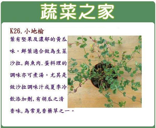 【蔬菜之家】K26.小地榆種子60顆(葉有堅果及濃郁的黃瓜味。鮮葉適合做為料理的調味亦可煮湯。含豐富維他命.香草種子)