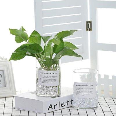 玻璃水培植物花瓶花盆透明 綠蘿 富貴竹水養桌面圓柱花瓶器皿容器