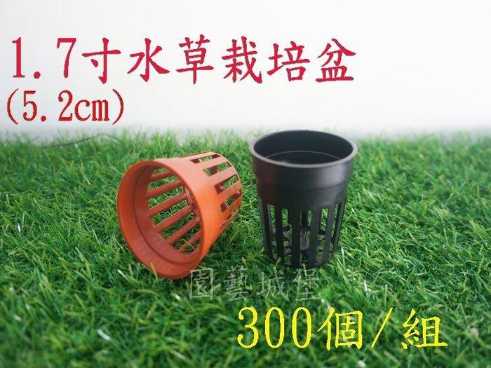 【園藝城堡】1.7寸(5.2cm)水草栽培盆300個/組《磚紅色下標區》