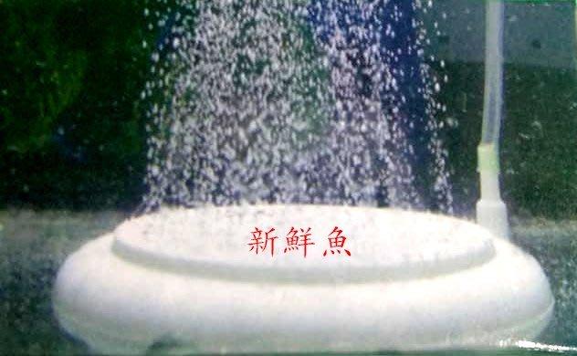 ~新鮮魚水族館~霧化 HT50 極細 低壓 奈米 圓盤 氣泡石 圓型 細化器 細緻 增氧 雪餅 溶氧 曝氣 S/5cm