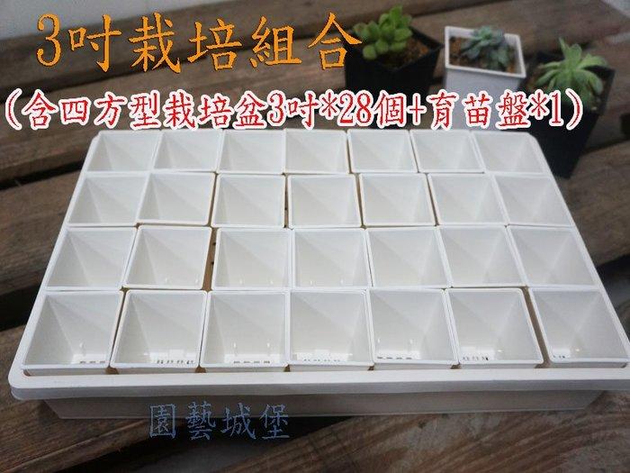 【園藝城堡】3吋栽培組合(含四方型栽培盆3吋白色*28個+育苗盤*1個)