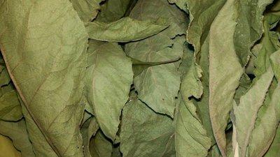 【雲霧之尖】南非葉/扁桃斑鳩菊 純葉片~乾品~ 50g 特價150元 可合併運費