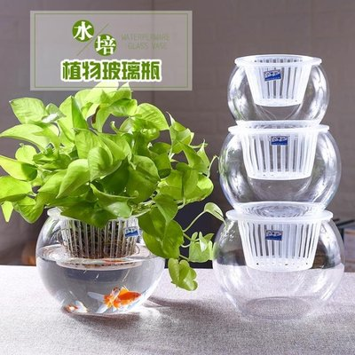 水培植物玻璃瓶 水培綠蘿花瓶花盆玻璃圓球水養魚缸器皿容器 WD    全館免運