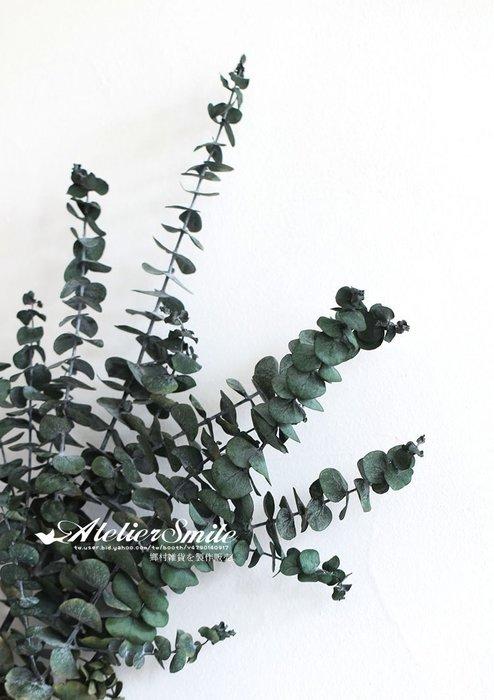 [ Atelier Smile ] 鄉村雜貨 小花園系列 尤加利  裝飾果樹  拍攝道具 3支裝 (現+預)