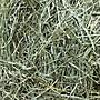 §兔尾巴§►2包免運◄ 梗葉參半 提摩西牧草T2 2kg