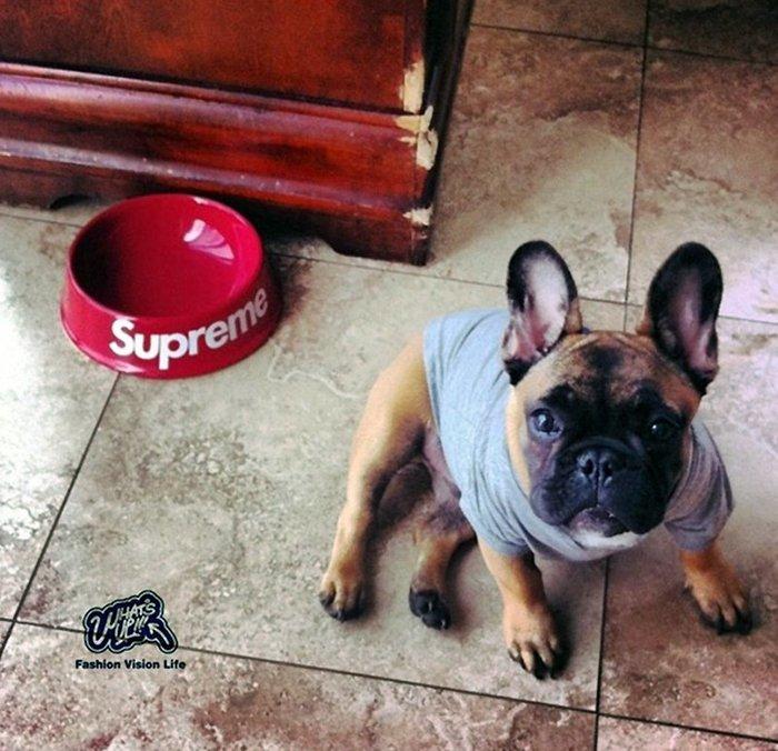 Supre 陶瓷寵物碗  水盆  中小型犬