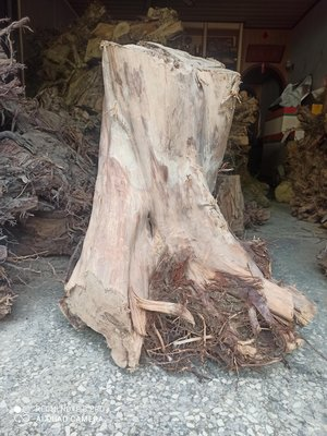 台灣肖楠原木樹頭,山材合法,特價出清,每公斤90元,可挑選,量大