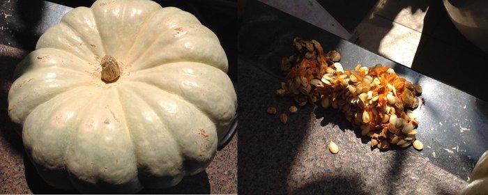 【n0900台灣健立最便宜】2018White Pumpkin美國白色大南瓜種子每包2顆$15