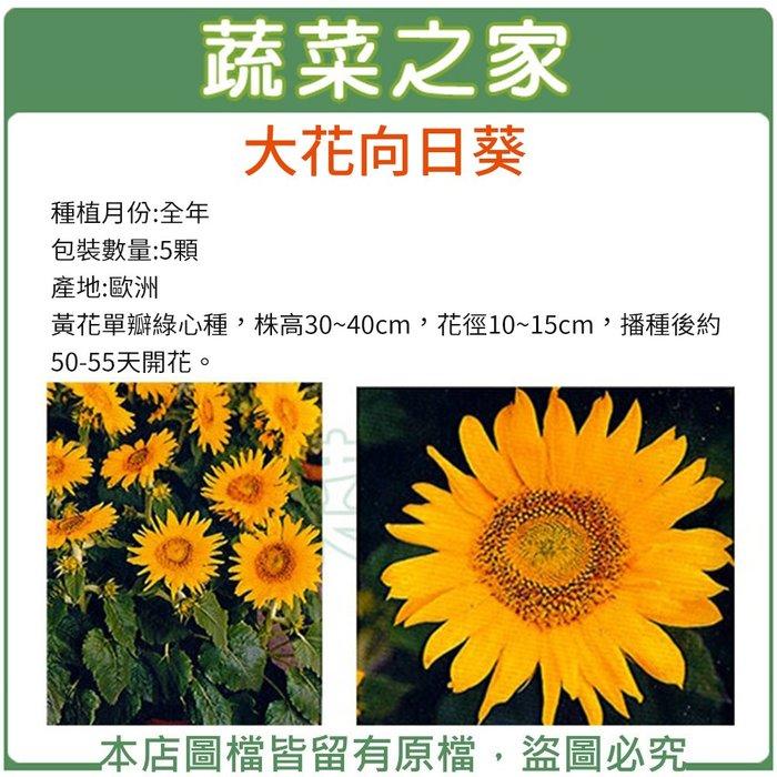 【蔬菜之家】H41.大花向日葵種子5顆(花徑10~15cm.株高30~40cm)花卉種子
