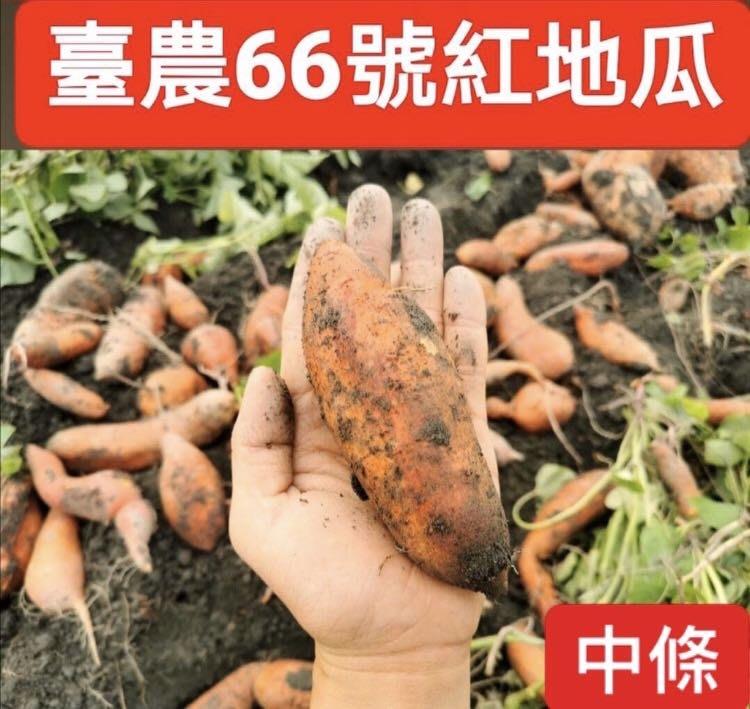 臺農66號紅心地瓜《中條》/無毒認證通過/豐富胡蘿蔔素