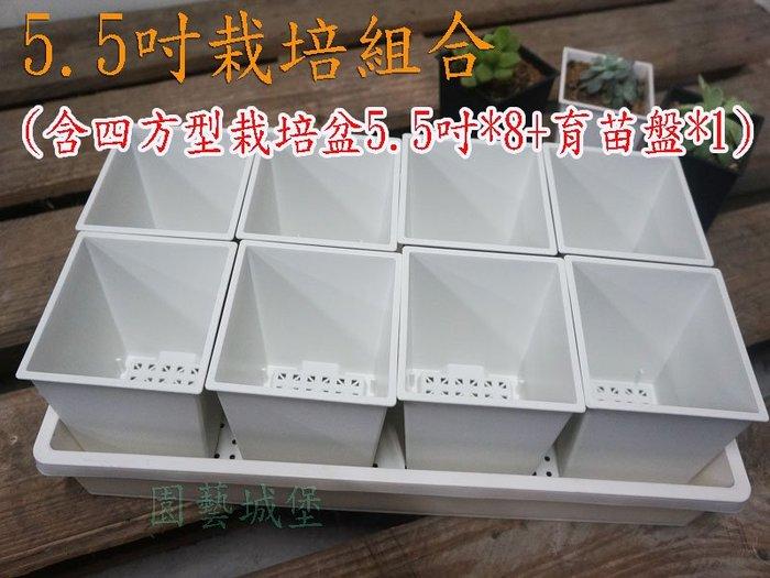 【園藝城堡】5.5吋栽培組合(含四方型栽培盆5.5吋白色*8個+育苗盤*1個)