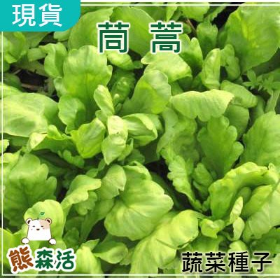 ~全舘滿790免運~茼蒿種子 約400粒 Garland Chrysanthemum 農友種苗 【熊森活】