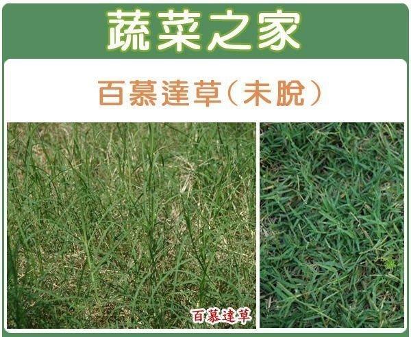 【蔬菜之家】M02.百慕達草種子(未脫殼)25000顆(草皮種子)