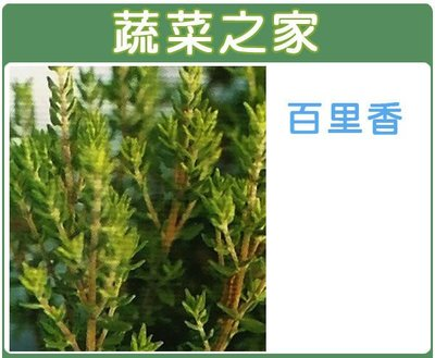 【蔬菜之家】K02.百里香種子200顆...