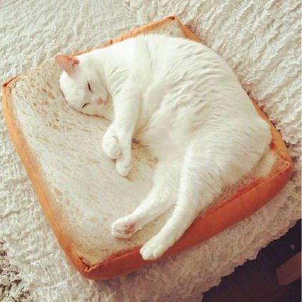 一片切片面包坐墊子吐司寵物貓咪土司毛絨抱枕座墊玩具靠墊
