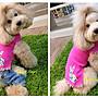 貝果貝果 日本 idog 可愛小兔上衣裙 兩色 法鬥 / 中型犬 [D1577]