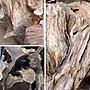【御品天香】台灣三峽肖楠沉油 12ml下標頁 山材頭根部提煉 肖楠精油 檜木精油 牛樟精油 純精油 扁柏 山材 精油批發